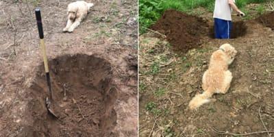 Mira impotente mientras cavan su tumba: la cosa no salió como esperaban