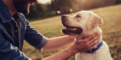 pasos enseñarle perro pasear