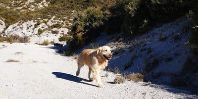 Perro paseando libremente sin correa