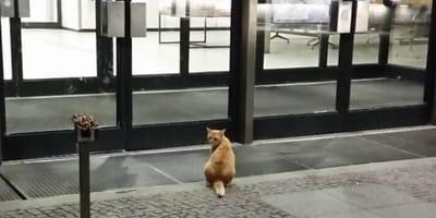 Katze vor Krankenhaus