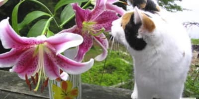common house flowers are poisonous for cats
