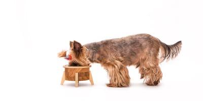 Czy ryż jest zdrowy dla psa?