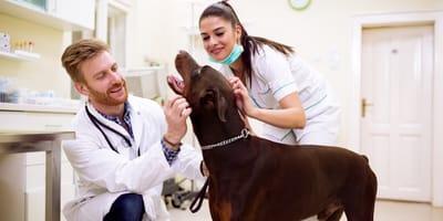 Lekarz weterynarii – czym się kierować podczas wyboru?