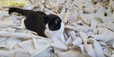 cat playtime goes viral