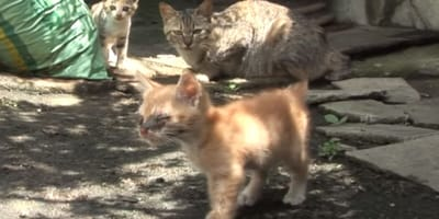 Ein blindes Kätzchen kann wieder sehen