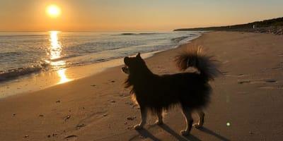 Hund am Strand von usedom