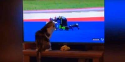 gatto tocca la tv