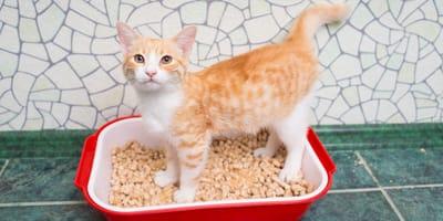 Arena de gatos: ¿cuál es el mejor sitio para colocarla?