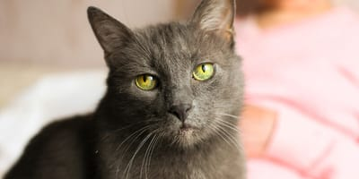 Ageing cat: everything you need to know