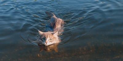 Katze schwimmt
