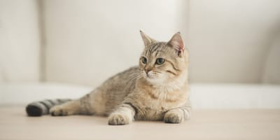 5 grandmother's remedies to take care of your cat's coat