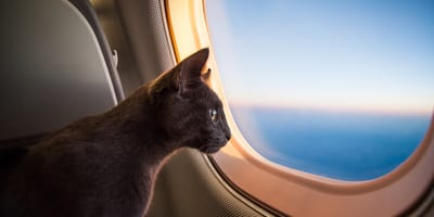 Travel pharmacy for your cat