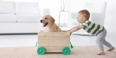 ¿Puede jugar mi hijo pequeño con el perro?