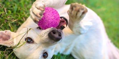 3 juegos para disfrutar con un perro cachorro