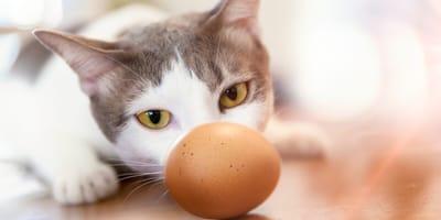 Katze und Ei