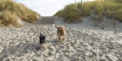 Urlaub an der Ostsee: Ein Paradies für Hunde