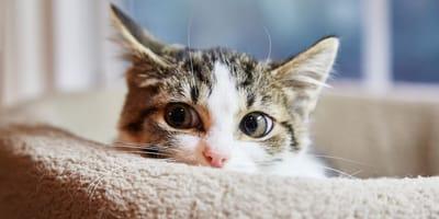 Quiero adoptar un gato pero, ¿mi ritmo de vida es el adecuado?