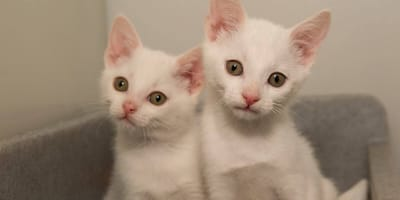 The law needs to change to protect kittens like Dill and Daff