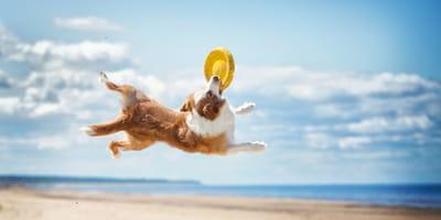 Un perro jugando