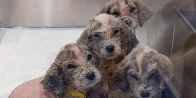 Six pups who grew considerably bigger.