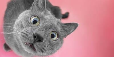 Kot jedzący Maggi.