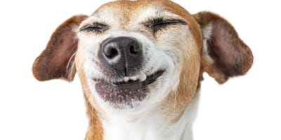 Perro con la boca bien sana