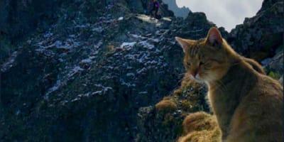 gatto sulle montagne