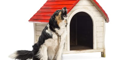Cómo hacer para que mi perro no ladre cuando está solo