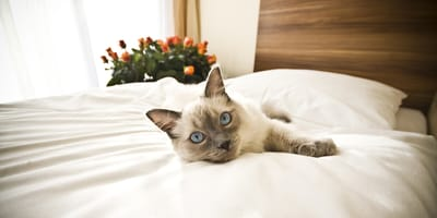 Los 3 mejores hoteles para viajar con tu gato en España
