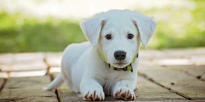Un cucciolo ha autonomia di tenuta ridotta