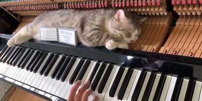 Kot_spi_w_pianinie