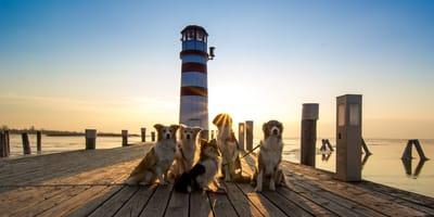 Hunde vor Leuchtturm beim Sonnenuntergang