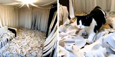 Pusic bawi się papierem toaletowym