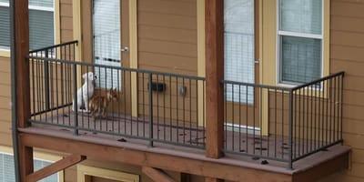 Mężczyzna zamyka psy na balkonie i się wyprowadza. Gdzie jest sprawiedliwość?
