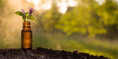 Bachblüten-Therapie für unterschiedliche Leiden der Katze