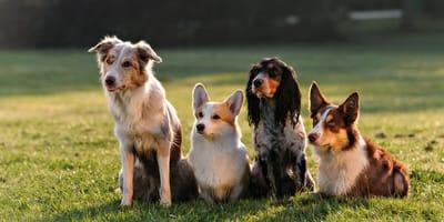 siedzące psy