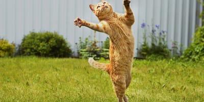 gatto che salta in un prato