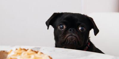 Nie dla psa kiełbasa? Co czwarty Polak karmi psa jedzeniem przeznaczonym dla ludzi!