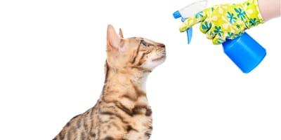 castigar a tu gato con un rociador de agua