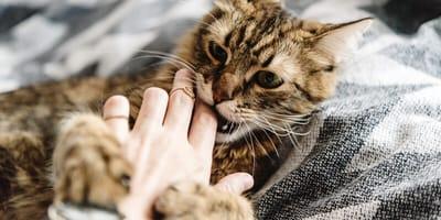 Autsch! Warum beißt und kratzt mich meine Katze?