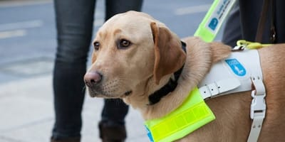 Long wait facing blind people in the UK as they wait for a guide dog