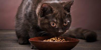 Katze und Futternapf