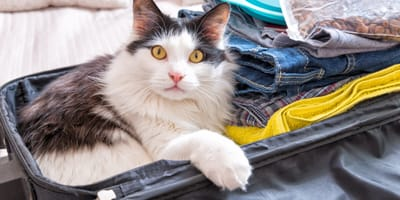 All you need to know to about going on holiday with your cat