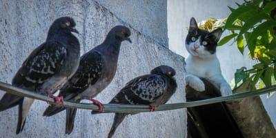 Cats kill over 20 million birds every year