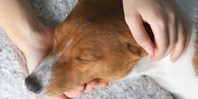 consejos adaptacion perro adoptado