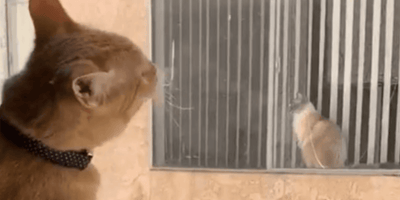 Katzen sehen sich durch Fenster an