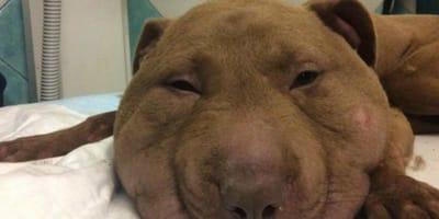 Kopf extrem geschwollen: Tierärztin muss weinen, als sie kapiert warum