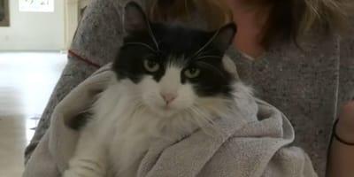 Lost cat returns home 475 days after mudslide