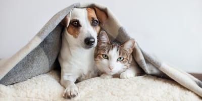 Hund und Katze gemeinsam unter Decke