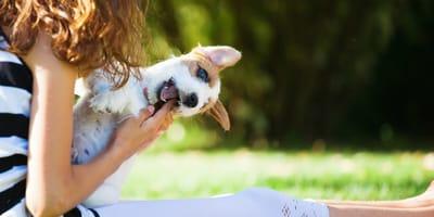 Wenn der Hund beim Spielen beißt und kneift: So reagieren Sie richtig
